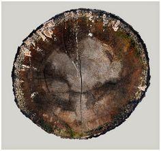 Objkt Photography - Stump 20