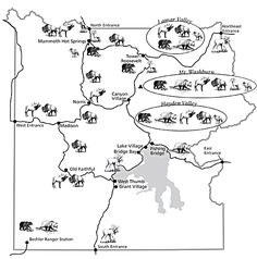 Map of Yellowstone with mammals drawn where they are generally located.