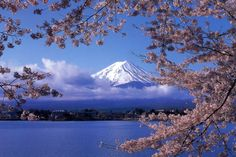 Japan in Spring - I'm absolutely in love with Japan, and have been there once in the fall and once in the winter, but still have yet go when it looks like this - Sakura Season
