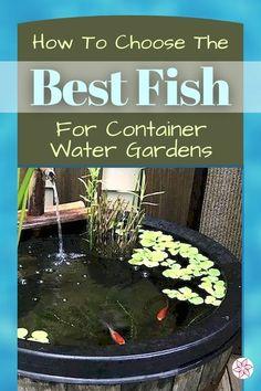 Small Water Gardens, Fish Pond Gardens, Garden Ponds, Garden Water, Container Fish Pond, Container Water Gardens, Container Gardening, Small Fish Pond, Small Ponds