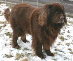 wieder ein fall von animal hording hunde hunde pinterest hunde leben und liebe. Black Bedroom Furniture Sets. Home Design Ideas