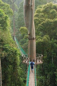 Rainforest Canopy Walkway - Borneo, Indonesia. And I thought the bridge in vancouver was daunting- yikes! #KahikiLove