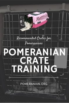 Pomeranian Crate Training,  Crate Training Tips for Pomeranians, Crate Training Pomeranian. #dochlaggie #pomeranian Pomeranian Dogs, Pomeranians, Crate Training, Training Tips, Dog Information, Training Your Puppy, Separation Anxiety, Dog Care Tips, Are You Happy