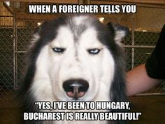 Husky memes - Funny Dog Quotes - The post Husky memes appeared first on Gag Dad.