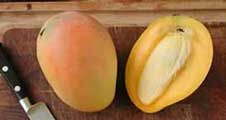 Mango: cómo sembrar un hueso de mango