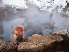 Jigokudani Snow Monkey Park, Yudanaka, Japan