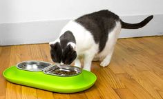 The Hepper NomNom Bowl makes eating easier by raising the food off the floor…