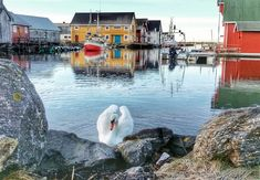 Fishing Villages, Dream Life, Bud, Norway, Pretty, Gem, Eyes, Knob