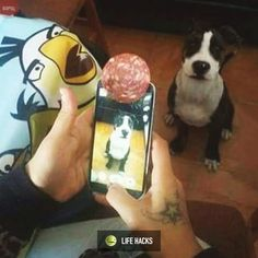 How to take a perfect photo of your dog! LOL
