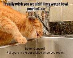 Not sure i should be allowed back in the kitchen Kitchen Stand Mixers, Kitchen Mixer, Kitchen Tools, Appliance Reviews, Cool Captions, Kitchen Humor, Small Appliances, Funny, Life