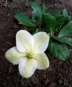 Ha eddig nem ismerted a hunyort, ezután imádni fogod Honeydew, Fruit, Plants, Balcony, Plant, Planets