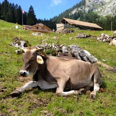 Brunni-Alpthal Tourismus | tellbook.ch Switzerland, Notes, Animals, Travel, Tourism, Environment, Hiking, Animais, Animales