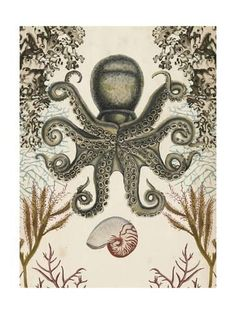 Antiquarian Menagerie - Octopus Posters by Naomi McCavitt - AllPosters.co.uk