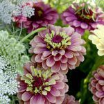 Perennials areplants that live for more than two years. The long lasting perennials are what you need in your garden. If you are just started gardening th