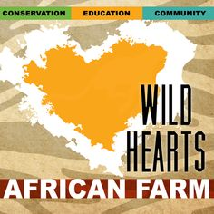 Wild Hearts African Farm & Petting Zoo Local Activities, Petting Zoo, Make A Donation, Wild Hearts, Zoo Animals, Conservation, Ohio, Connect