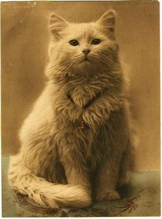 One of the first cat portraits Tap the link for an awesome selection cat and kitten products for your feline companion! Cool Cats, I Love Cats, Crazy Cat Lady, Crazy Cats, Chat Beige, Photos Vintage, Vintage Portrait, Gatos Cool, Photo Chat