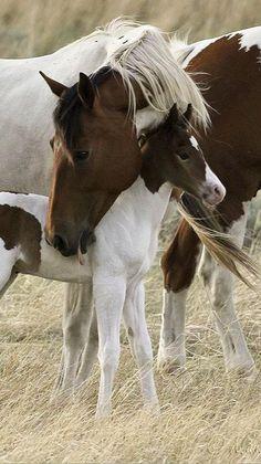 All The Pretty Horses, Beautiful Horses, Animals Beautiful, Simply Beautiful, Beautiful Family, Beautiful World, Baby Horses, Wild Horses, Baby Animals
