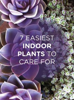 Lacking a green thumb? No worries! Check out these easy indoor plants to care for!