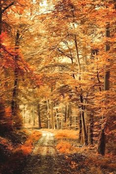 $97.49 · Photograph of an Autumn landscape with a path through woods with orange leaves and a shallow depth of field.