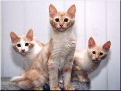 Mücevher Sedef, Mücevher Yakut Karzan en Mücevher Elmas (7-9-2003)