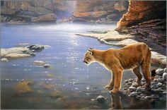 John Seerey-Lester - Canyon Creek - Cougar