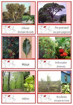 encore de nouvelles cartes de nomenclature des continents : les arbres Theme Nature, Study Board, Teaching Skills, Technology Humor, Europe, Preschool Kindergarten, Small World, Botany, Science Nature