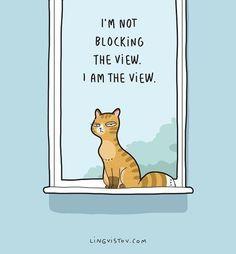 Relatable Cat Comics For Feline Owners & Appreciators - Memebase - Funny Memes I Love Cats, Cute Cats, Funny Cats, Funny Horses, Adorable Kittens, Funny Animal, Crazy Cat Lady, Crazy Cats, Funny Illustration