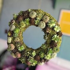 Tuesdays plant mood is this cute lil growing succulent wreath  (Photo: sarasmt.tumblr.com)