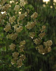 Raining...