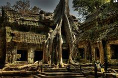 Ta Prohm - Siem Reap, Cambodge