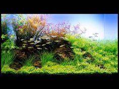 аквариум Такаши Амано