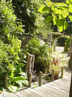 Too 'jungly' and rustic Planting, Unity, Garden Design, Scale, Gardens, Key, Rustic, Weighing Scale, Plants