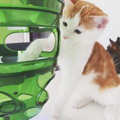 Work hard - eat well - sleep often.  #luckythecat #love #cute #catsofsalzburg #salzburg #austria #cat #meow #ilovemypet #catlovers #lovekittens #instapet #catsagram #kitten #kitty #catstagram #kittycat #catsofinstagram #ilovemycat #catlove #catoftheday #furry #cats_of_instagram #cats #catlife #katze #katzenliebe #katzenleben #bestmeow