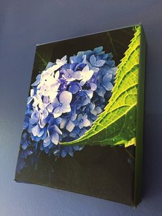 Items similar to Blue Purple Hydrangea with Leaf - Stretched Canvas Print on Etsy Stretched Canvas Prints, Hydrangea, Purple, Blue, Leaves, Unique Jewelry, Handmade Gifts, Painting, Etsy