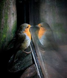 Bewundern Sie die Fotos der Kalenderwoche 50 der Piqs.de Community. Diesmal sind viele Winter-Motive dabei: √ Vogel √ Kamel √ Schnee √ Natur √ Katze
