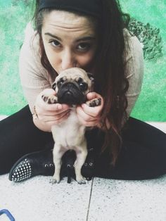 Itty bitty baby pug.....OMG....I WANT one!!!!