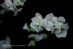 Botanical Garden. #flowers #flower #petal #petals #nature... By Rakesh Krishnotula Follow on IG : rakesh.krishnotula Production : volume.asia