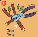 twig1