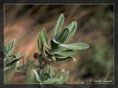 Dans la garrigue... https://www.facebook.com/pages/Mistoulin-et-Mistouline-en-Provence/384825751531072