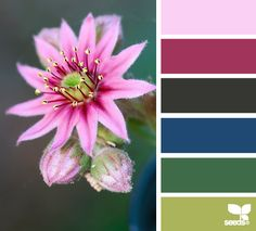 nature color combination - Pesquisa Google