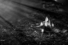 Spring-The Beginning de Lucian Olteanu sur Art Limited