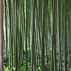 Les aménagements paysagers | La Bambouseraie d'Anduze - Forêt de bambous