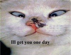 Because of my love of cats I'm going to share some fabulous pictures from the WEB, ENJOY! If you have any Funny cat pictures you'd like to share…send them along…I'll g… Funny Cat Images, Funny Animal Pictures, Crazy Pictures, Kitty Images, Baby Animals, Funny Animals, Cute Animals, Funny Dogs, Funny Hamsters