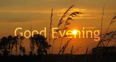 Good Evening Sunsets sun sunset trees pictures