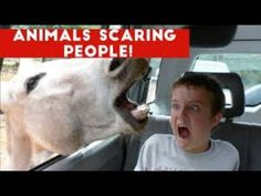 Funniest Animals Scaring People Reactions of 2016 Weekly Compilation Funny Home Videos, Funny Animal Videos, Funny Animals, Funniest Animals, Funny Memes About Work, Work Memes, Videos Of Kids, Pet Videos, Funny Babies