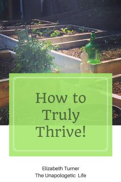 """How to Truly Thrive and create a life you are in love with. I believe that you here to live a life full of happiness, abundant energy and be in a space where all of your dreams have come true. Click through to read the entire post and gain instant access to my free """"Own Your Voice and Love Your Life"""" webinar."""