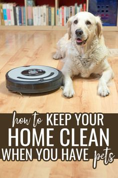 Just because you own a cat or dog doesn't mean that you can't keep your house clean. Check out these 5 tips to help you keep your house clean with pets and get rid of the pet hair and odor. Blue Carpet, Diy Carpet, Shelter Dogs, Animal Shelter, Feline Leukemia, Best Pet Insurance, Owning A Cat, Pet Odors, Healthy Pets
