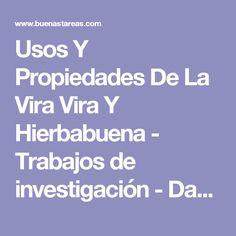 Usos Y Propiedades De La Vira Vira Y Hierbabuena - Trabajos de investigación - Danielita2001