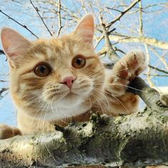 . Domestic Cat, Kitty, Cats, Pictures, Animals, Little Kitty, Photos, Gatos, Animales