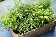 NOTHING smells better than fresh cut herbs.